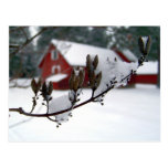 Dried Blossoms & Red Barns Postcard