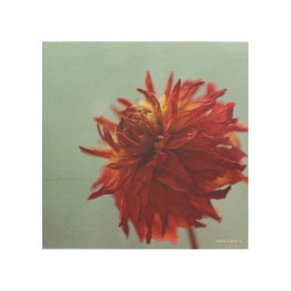 Dried Dahlia Wood Canvases