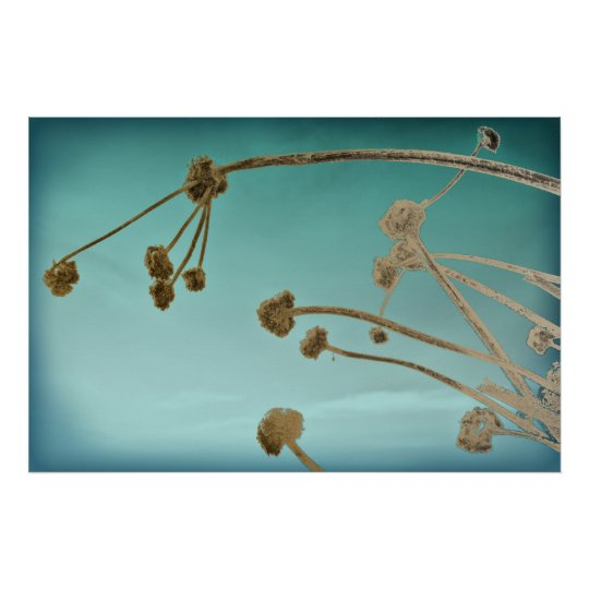 Dried Flower Stalks Against a Teal Sky Poster