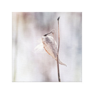 Dried Milk Weed Pod in Winter Soft Pastel Colors Canvas Print