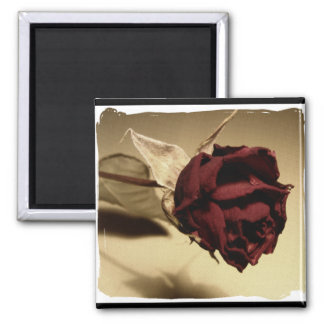 Dried Rose Photograph - Color Square Magnet