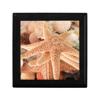 Dried sea stars sold as souvenirs 2 gift box