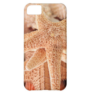 Dried sea stars sold as souvenirs 2 iPhone 5C case