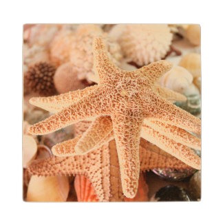 Dried sea stars sold as souvenirs 2 wood coaster