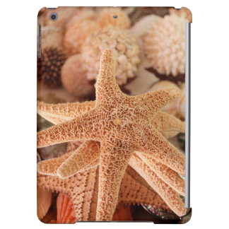 Dried sea stars sold as souvenirs cover for iPad air