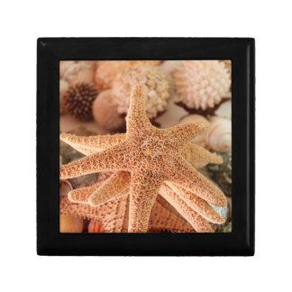 Dried sea stars sold as souvenirs gift box