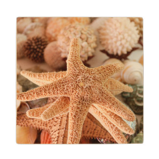 Dried sea stars sold as souvenirs wood coaster