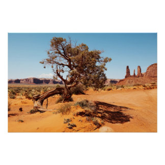 Dried tree in Monument valley, Arizona desert Poster