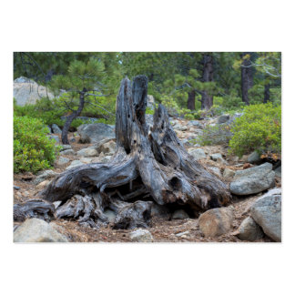 Dried Tree Trunk In The Forest Pack Of Chubby Business Cards