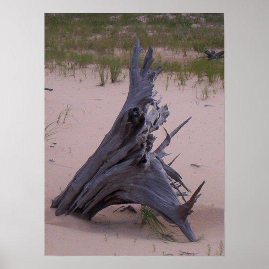 Drift Wood Poster