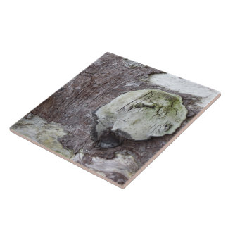 Driftwood 2 large square tile
