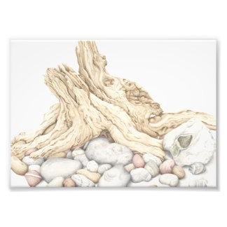 Driftwood and Pebbles Still Life in Pencil Photo Print