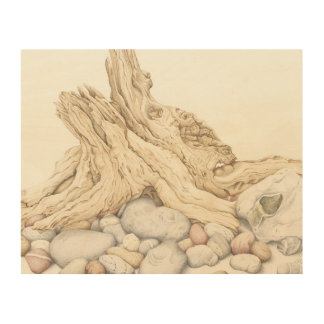 Driftwood and Pebbles Still Life in Pencil Wood Print