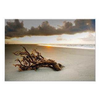 Driftwood at Sunrise on Pawleys Island Photo Art