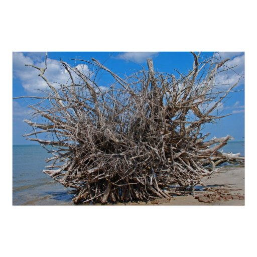 Driftwood on the Florida Beach Poster