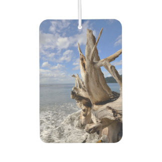 Driftwood On The Shoreline Of French Beach Car Air Freshener