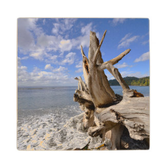Driftwood On The Shoreline Of French Beach Wood Coaster