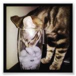 Drink Thief Cat Photo