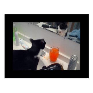 Drinking Cat Postcards! Postcard
