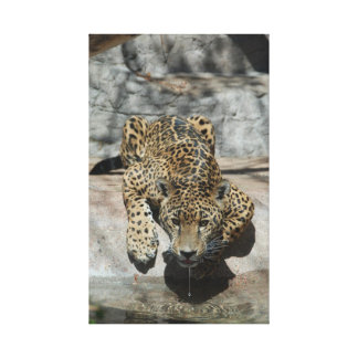 Drinking Jaguar Gallery Wrapped Canvas