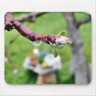 Dripping Drops Water Branches Buds Rain Mousepad