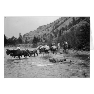 Driving pack mules across a river card