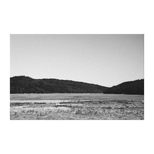 Driving Scenes - Driftwood