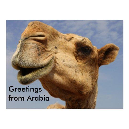 Dromedary camel postcard