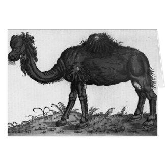 Dromedary, from 'Historial Animalium' Greeting Card