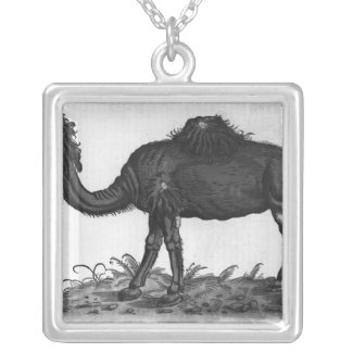 Dromedary, from 'Historial Animalium' Silver Plated Necklace