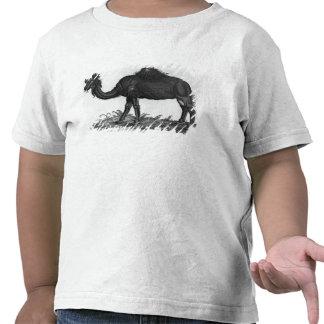 Dromedary, from 'Historial Animalium' Tee Shirts