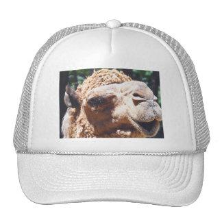 Dromedary One Hump Camel Face Closeup Cap