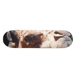 Dromedary One Hump Camel Face Closeup Skateboard