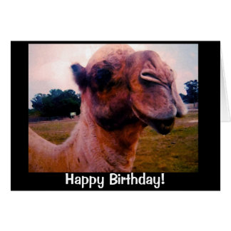 Drooling Camel Birthday Greeting Card