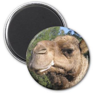 Drooling Camel Magnet
