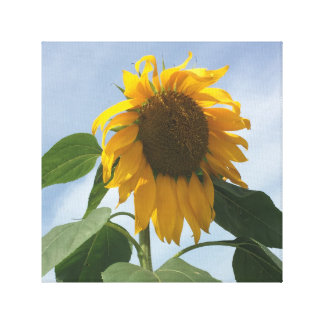 Droopy Sunflower Canvas Print