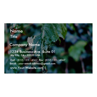Drop Of Rain Business Card Template
