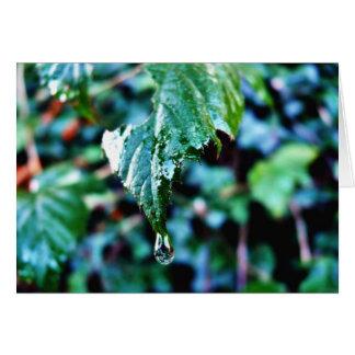 Drop Of Rain Greeting Card