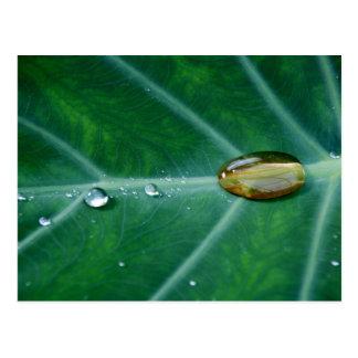 Drop of rain on a green leaf post card