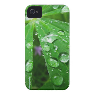Droplets on Green Plant Case-Mate iPhone 4 Cases
