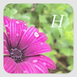 Droplets on Purple Daisy, Customizable Square Sticker