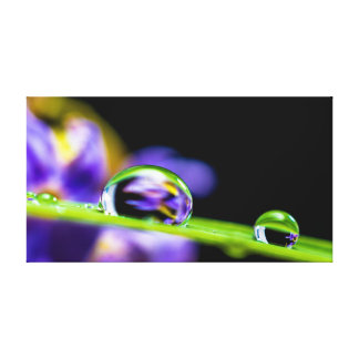 Drops of water stretched canvas prints