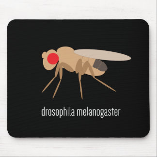 Drosophila Mousepad
