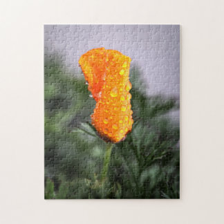 Drought-born California Poppy in the Rain Puzzle