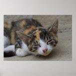 Drowsing Calico Kitten Poster