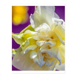 Drowsy Daffodil Postcard