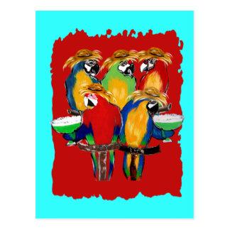 Drunkin Parrots Postcard