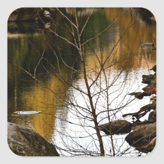 DRY BRANCH WITH RIVER AND LATE FALL BACKGROUND SQUARE STICKER