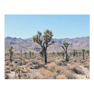 Dry brush and trees in the desert postcard
