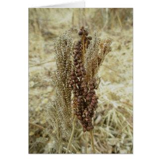 Dry Fern Note Card